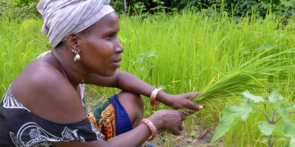 New MEDA project to support sustainable agricultural and business practices