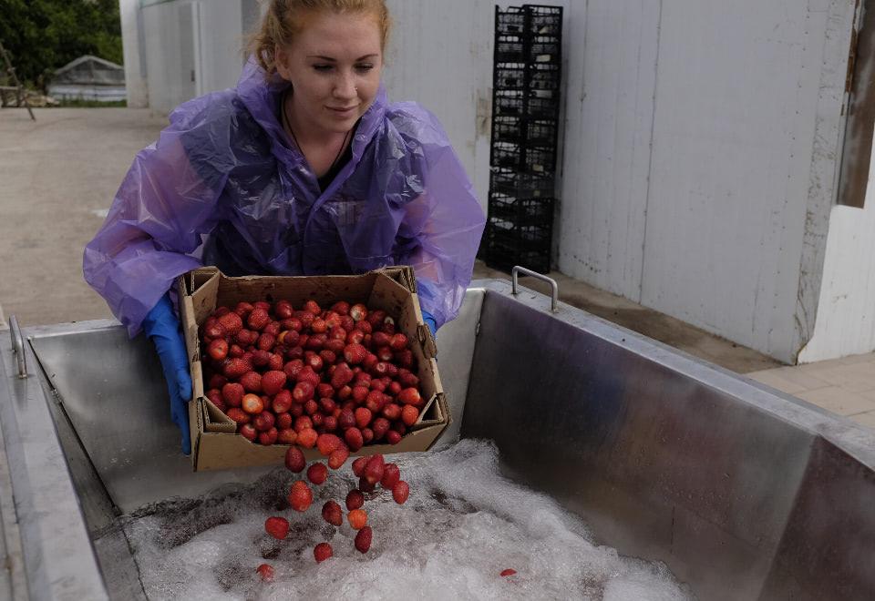 Femme lavant les fruits
