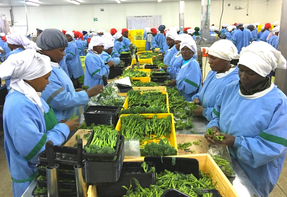 Factory workers with crops