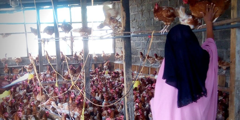 Fowzia Poultry Farmer