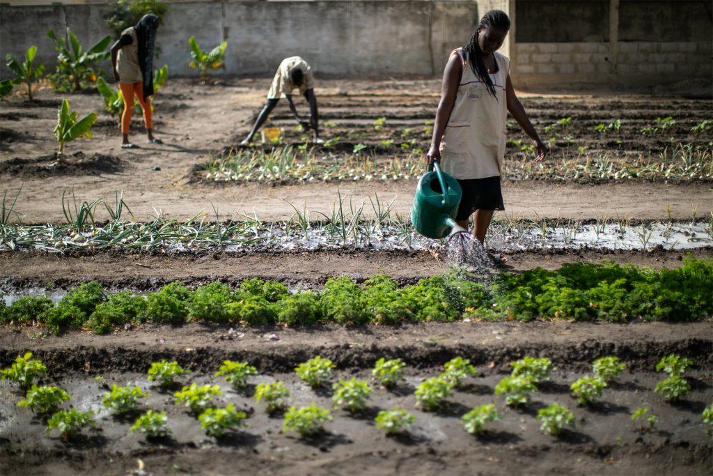 Agriculteur Sénégalais