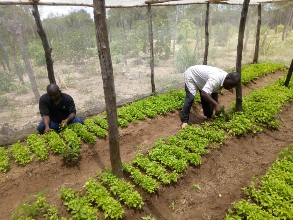 EKL Photo - Irrigation