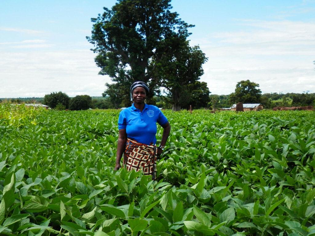 Woman farmer standing in her field of crops, Ghana.